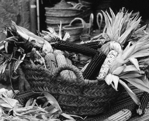 Kukoricás Játszó a Kenderkében